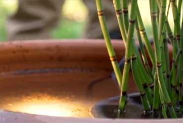 חולמים ליהנות מקול פכפוך המים בגינה?