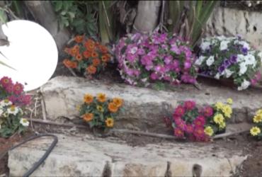 6 צעדים לשדרוג מראה המסלעה בגינה