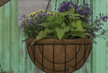 6 צעדים להכנת מערכת השקיה לעציץ תלוי