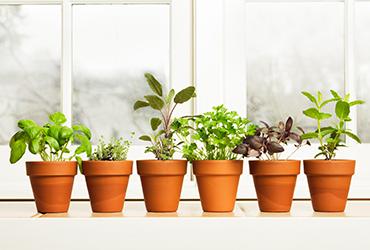 ג'ונגל עירוני: אילו צמחים כדאי לשתול בעונה הגשומה?