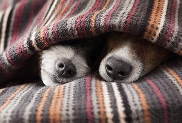 קור כלבים: כך תשמרו על הכלב שלכם בימים הקרים