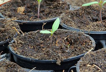 חורף צבעוני: כל הדרכים לגינה המושלמת בעונה הקרה
