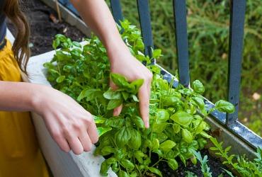 איך להקים גינת תבלינים ביתית? 6 טיפים ירוקים במיוחד