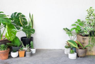 """ט""""ו בשבט לא רק בחוץ: צמחים מומלצים לגידול בבית"""