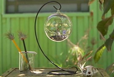 על צמחי תבלין וצמחי מרפא כולם שמעו- ומה עם צמחי אוויר?