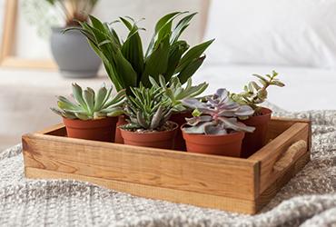 צמחים לפני השינה: 5 צמחים שיעזרו לכם לישון יותר טוב