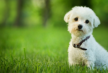 ליטופים ונהנים: 7 סיבות לאמץ חיות מחמד בימים הקרים